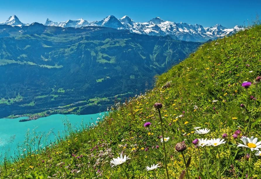 Carlton- Europe Vintage, Schweiz, Berner Oberland