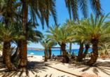 Mietwagen-Rundreise Kreta, Palmenstrand Vai