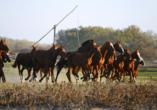 Rundreise entlang Ungarns Highlights, Puszta, Pferdeshow