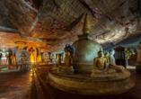 80 Höhlentempel gibt es in Dambulla, davon fünf große, die mit einer Fläche von 2.100 m² die größte Tempelanlage des Landes bilden.