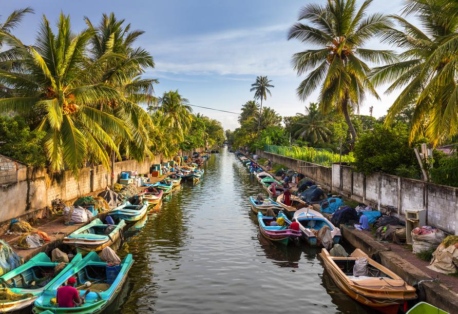 An der Westküste Sri Lankas befindet sich die Stadt Negombo, wo sich einer der wichtigsten Fischereihäfen befindet. Hier zu sehen der Hamilton Kanal.