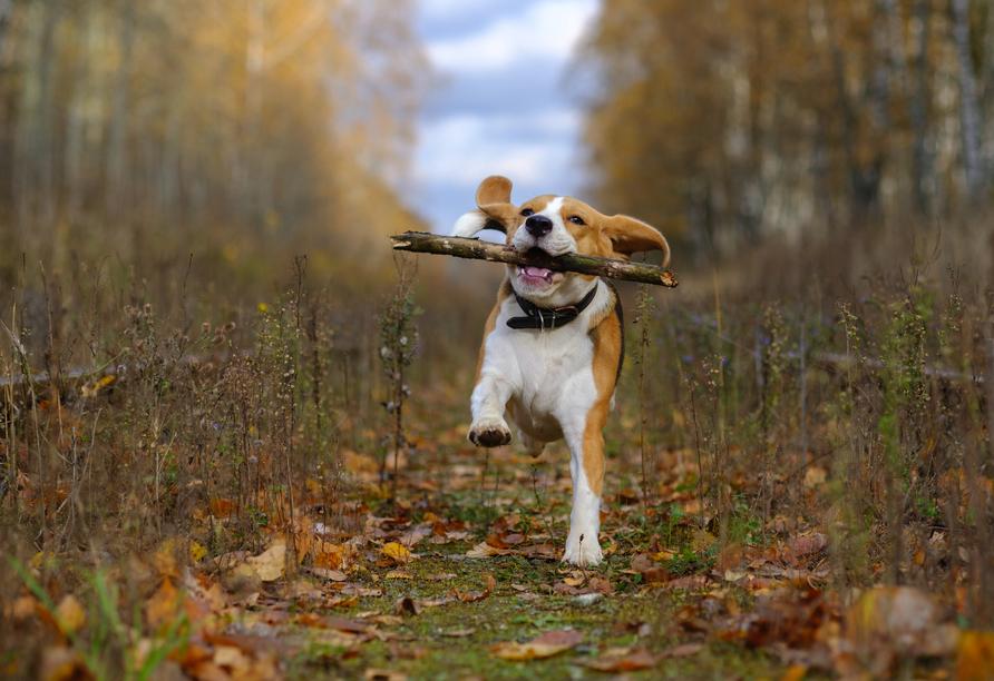 Auch Ihr Hund ist im IBB Hotel Altmühltal-Eichstätt herzlich willkommen.