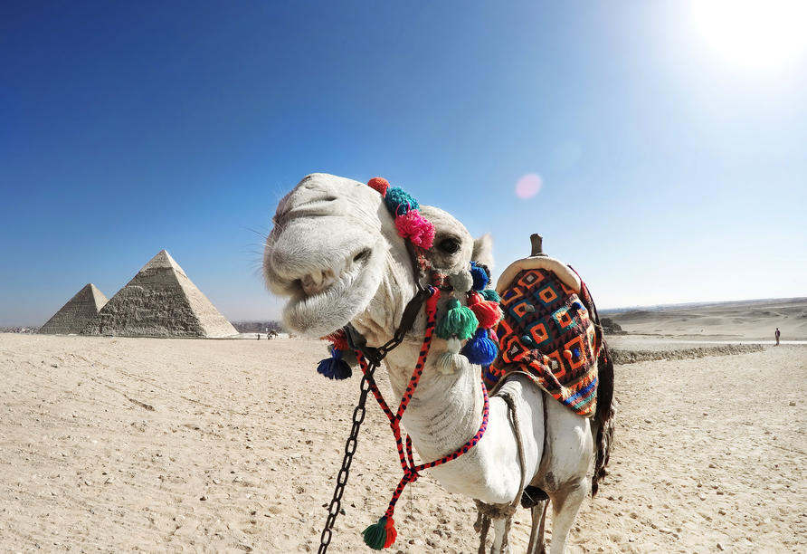 Entdeckerreise Nil, Kamel