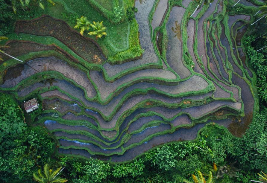 Artotel in Sanur, Reisterrassen Bali