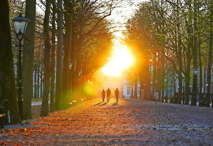 Schlendern Sie durch den beliebten Park Lange Voorhout in Den Haag.