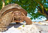 Hotel Parks, Velden Österreich, Riesenschildkröte