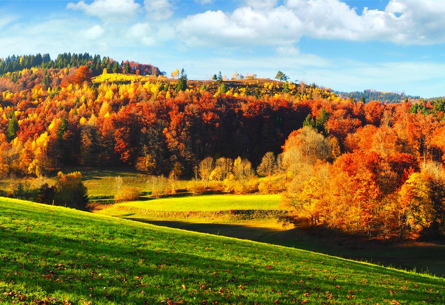 Der Schwarzwald begeistert zu jeder Jahreszeit.