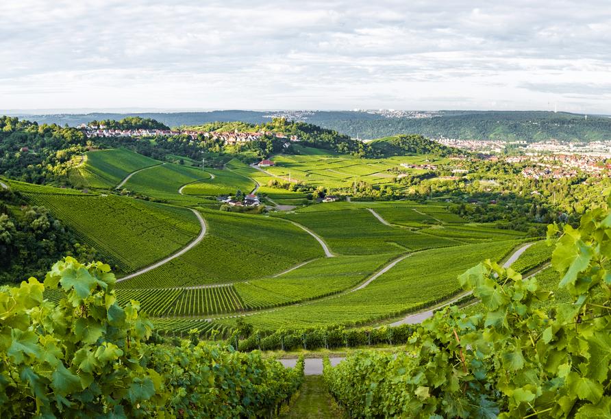 Eine Wanderung durch die Weinberge in Stuttgart (Kappelberg) lohnt sich.