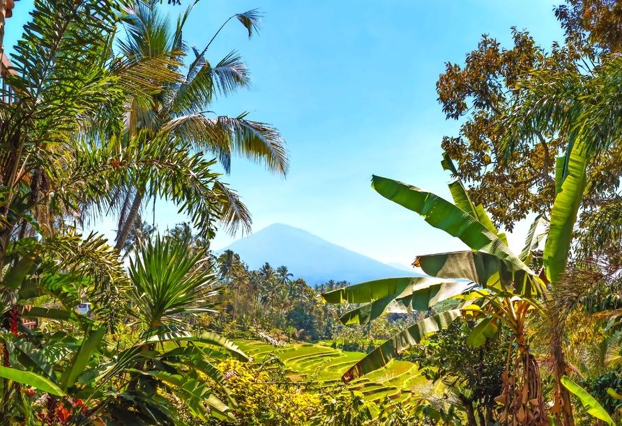 Artotel in Sanur, Vulkan Mount Batukaru