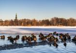 Der gefrorene Schwanenteich in Zwickau.