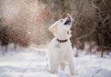 Hotel am Rossplan in Altenburg, Hund im Schnee