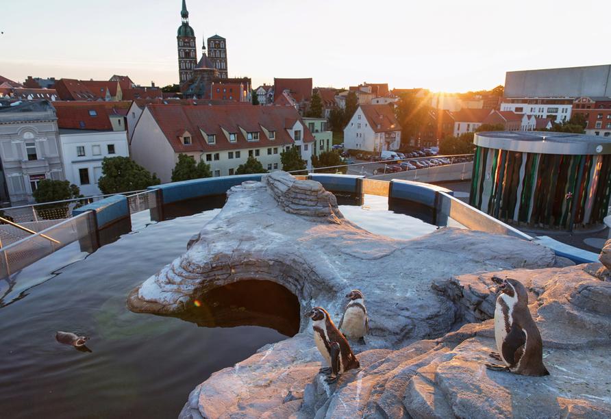 IntercityHotel Stralsund, Ozeaneum