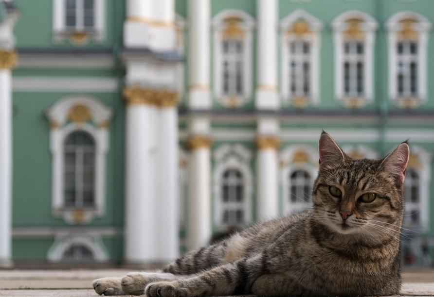 MS Wolga Star, Eremitage Katze