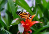 Der Garten der Schmetterlinge im Schlosspark beheimatet eine Vielzahl an bunten Faltern.