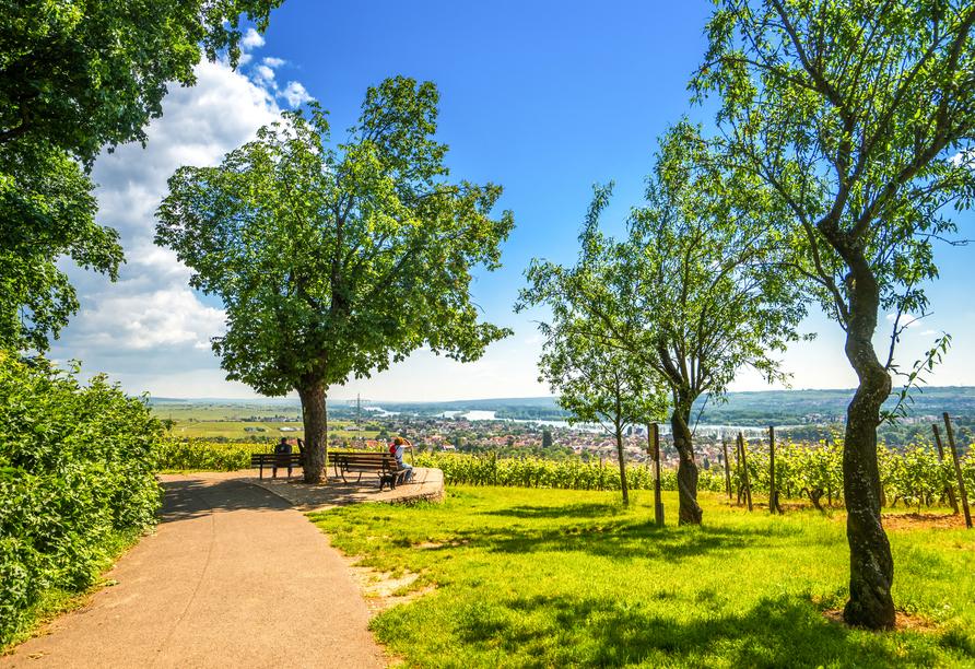 Genießen Sie die Aussicht über die Rosenstadt Eltville am Rhein bei einem Spaziergang durch den Rheingau.
