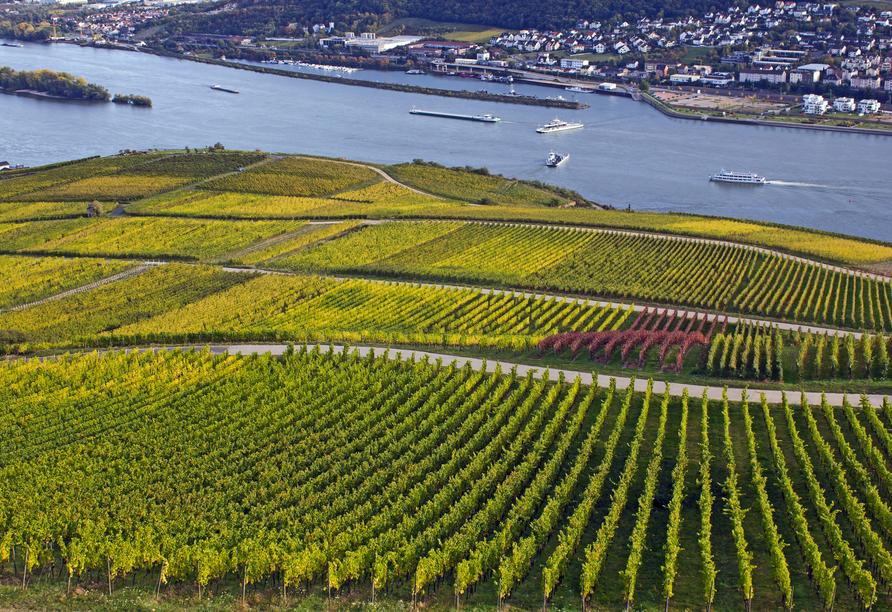 Die Weinberge bei Rüdesheim am Rhein