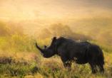 Breitmaulnashörner sind vom Aussterben bedroht – im Hluhluwe Imfolozi Park können Sie sie mit etwas Glück beobachten.