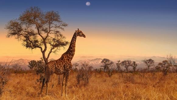Willkommen in Südafrika – bei den Safaris im Krüger Nationalpark und Hluhluwe Imfolozi Park kommen Sie den wilden Tieren ganz nah.