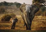 Wilde Tiere in ihrem natürlichen Lebensraum zu beobachten ist faszinierend und wird Ihnen in Erinnerung bleiben.