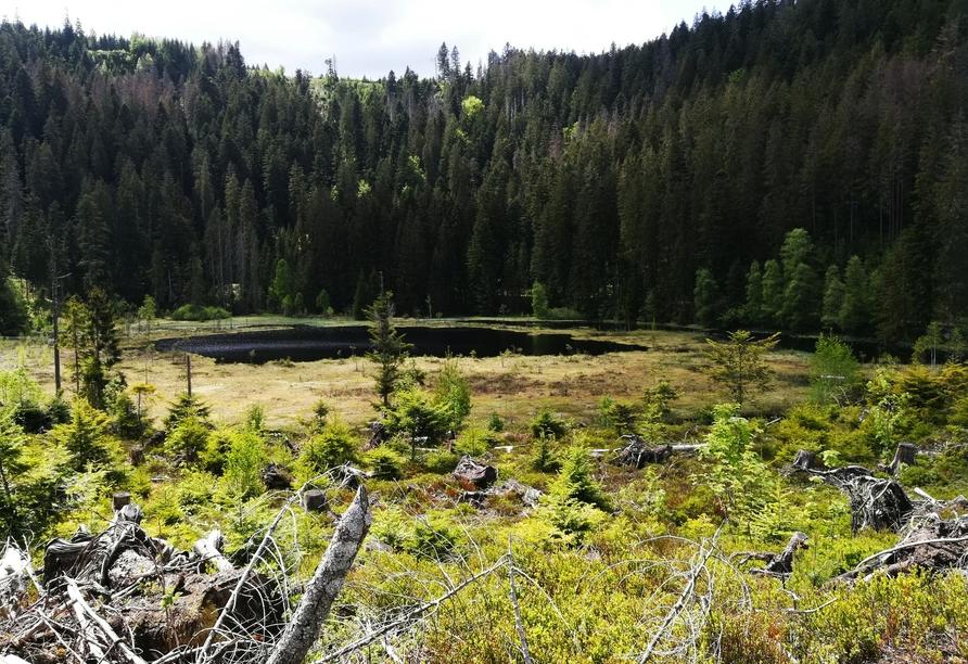 Der Baiersbronner Seensteig führt an stillen Ufern verwunschener Karseen vorbei.