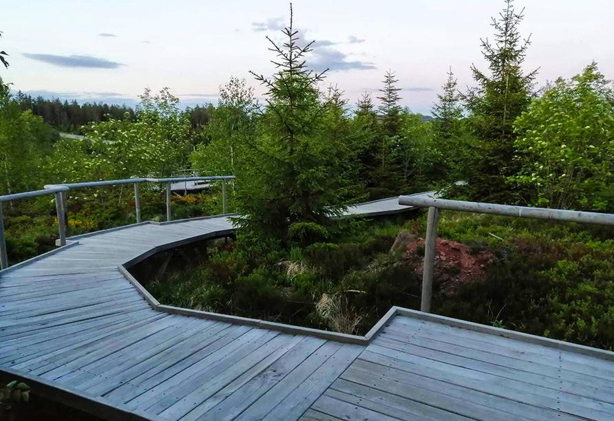 Der Walderlebnis- und Lehrpfad Lotharpfad ist ein grandioses Ausflugsziel.