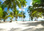 Die Dominikanische Republik ist bekannt für ihre weißen Sandstrände, die zum Träumen einladen.
