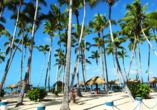 Palmen gehören zu einem richtigen Karibik-Urlaub einfach mit dazu.
