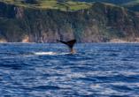 MS VASCO DA GAMA, Wale
