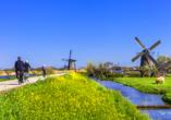 Radrundreise Bad Bentheim - Holland, Windmühlen