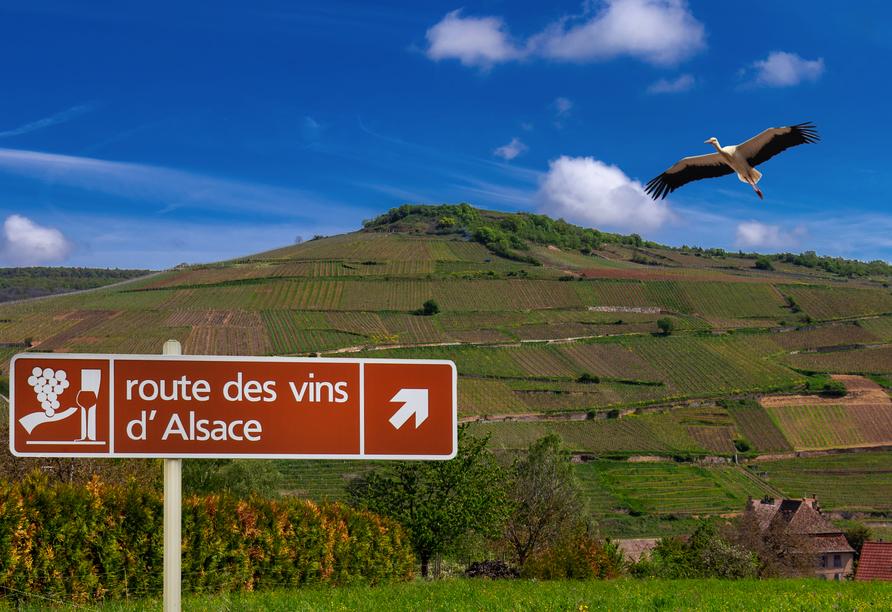 Erkunden Sie die Elsässer Weinstraße bei einer Wanderung oder mit dem Fahrrad.
