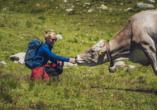 Hotel Ochsen 2 in Davos Platz, Mensch streichelt Kuh in den Schweizer Alpen