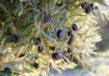 Freuen Sie sich während Ihrer Reise auf eine Olivenölverkostung.