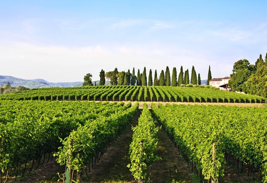 Mietwagenrundreise Norditalien, Weinbaugebiet Valpolicella
